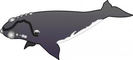 free vector Whale