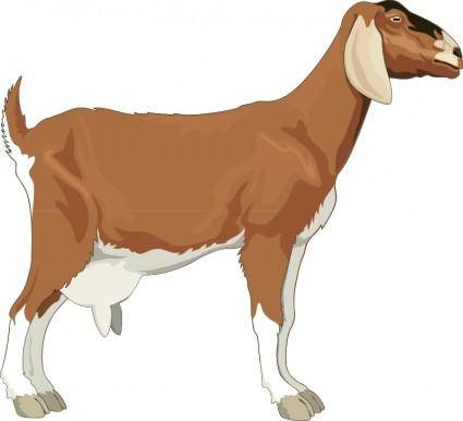 free vector Goat