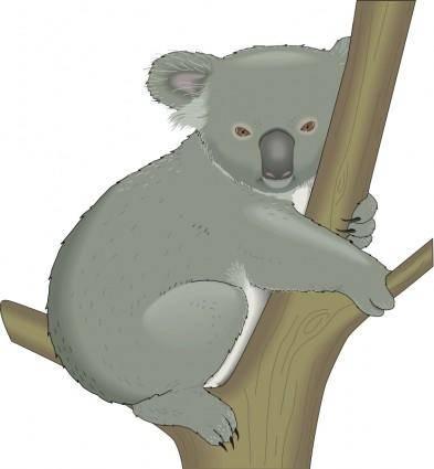 free vector Koala