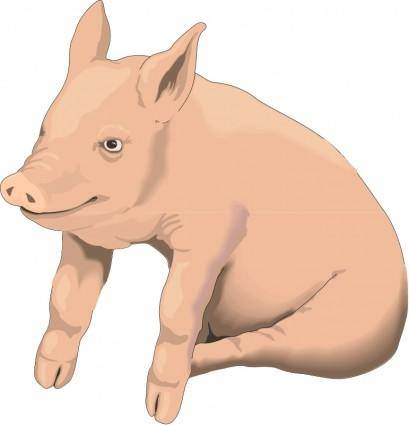 free vector Pig 2
