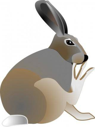 free vector Rabbit