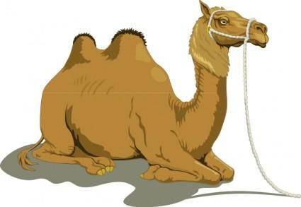 free vector Camel 1