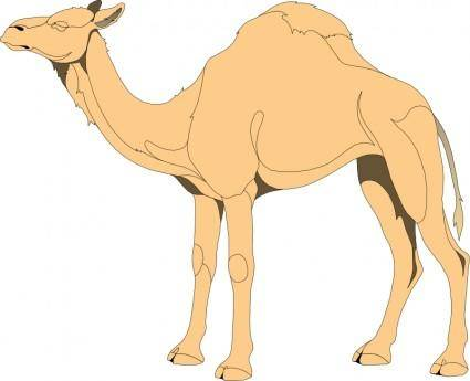 free vector Camel 4