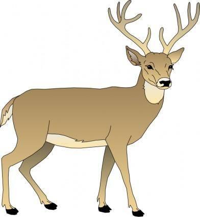 Deer 5