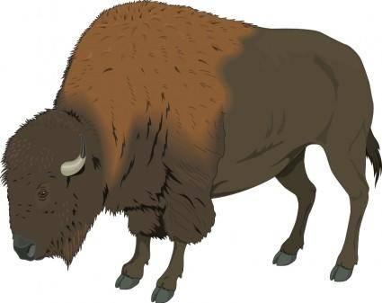 free vector Bison 1