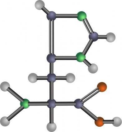 Histidine (amino acid)