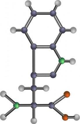 Tryptophan (amino acid)