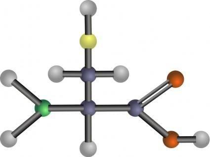 Cysteine (amino acid)