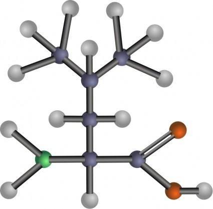 free vector Leucine (amino acid)