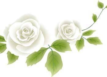 free vector Rose Flower Vetor 55