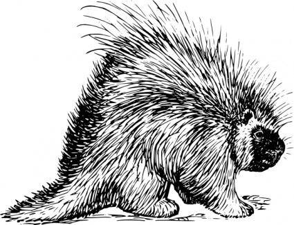 free vector Porcupine Rodent clip art