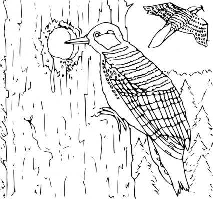 free vector Coloring Book Woodpecker clip art