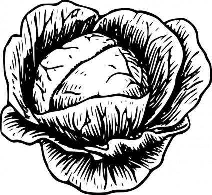 Cabbage clip art