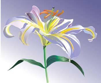 Lili Flower vector 2