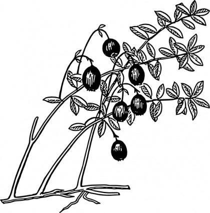 Cranberry clip art