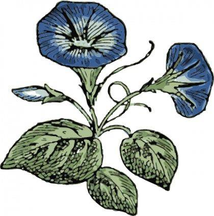 Morning Glory clip art