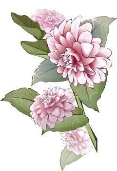 free vector Hrizantima Flower