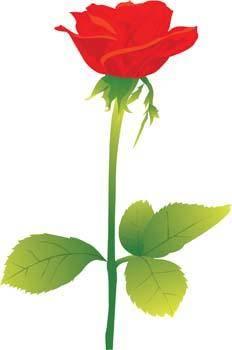 Rose Flower Vetor 15