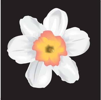 free vector Narcis Flower 12