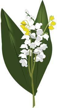 free vector Landish Flower 1