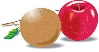 Apple 18