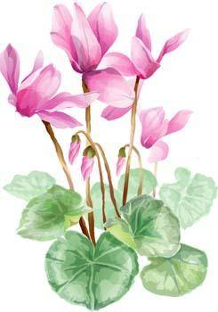 free vector Flower of Seven color 40