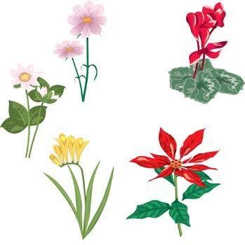 free vector Flower of Seven color 34