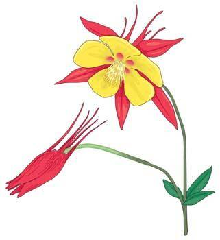 free vector Flower of Seven color 25