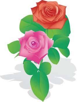 free vector Rose Flower Vetor 9
