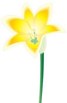 free vector Lirio Flower