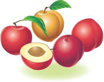 free vector Avocado fruits
