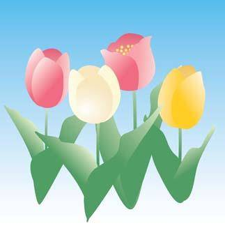 free vector Tulip Flower 21