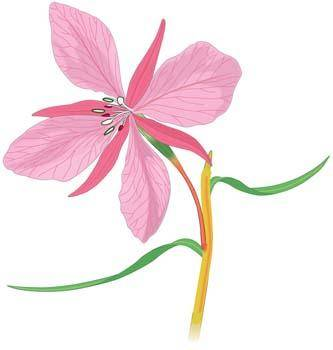 free vector Orchid Flower 2