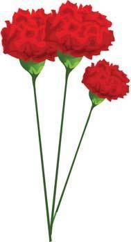 free vector Carnation Flower Gvozdika 4