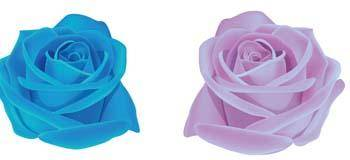 Rose Flower Vetor 44