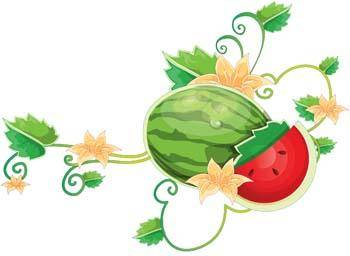 free vector Watermelon 10