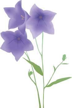 free vector Bell Flower 6