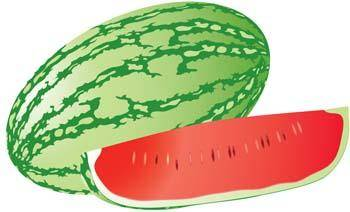free vector Watermelon 8