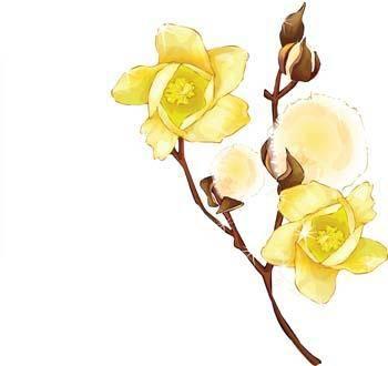 free vector Hlopok Flower