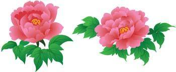 Pion Flower 1