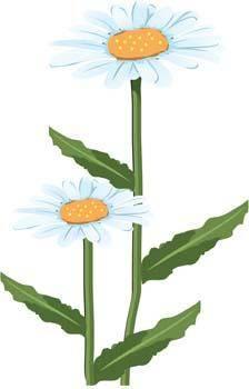 free vector Romashka daisy Flower 4
