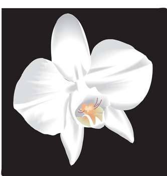 free vector Button Flower Vector 9