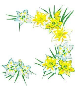 Narcis Flower 9