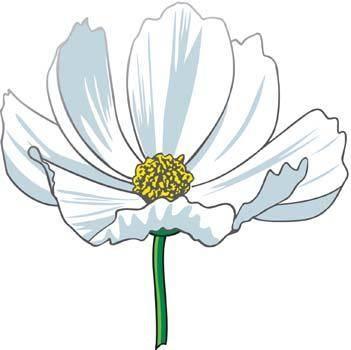 free vector Romashka daisy Flower 6