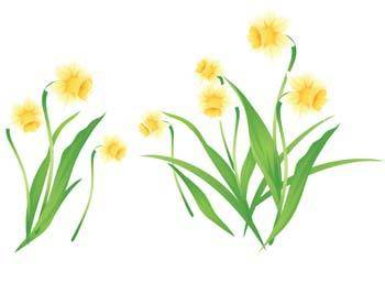 free vector Narcis Flower 3