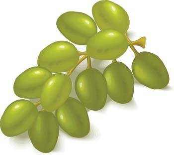 free vector Grapes 4