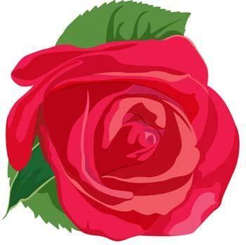 free vector Rose Flower Vetor 17