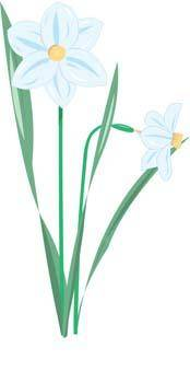 free vector Narcis Flower 10