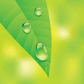 free vector Dew drops on leaf