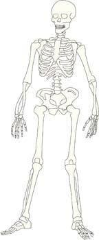 free vector Anatomy vector 3